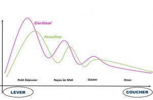 Cortisol Insuline